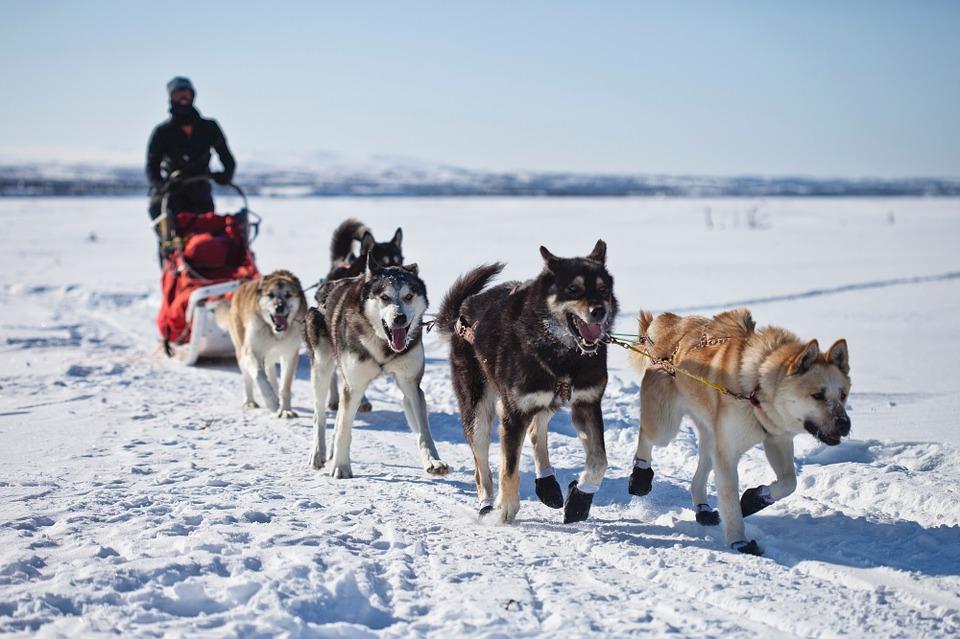 activite insolite randonnee chiens de traineau